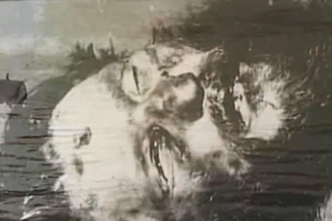 Posmrtný snímek Rasputina.
