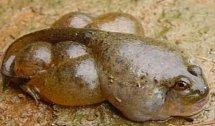 Podivně zdeformovaná žába