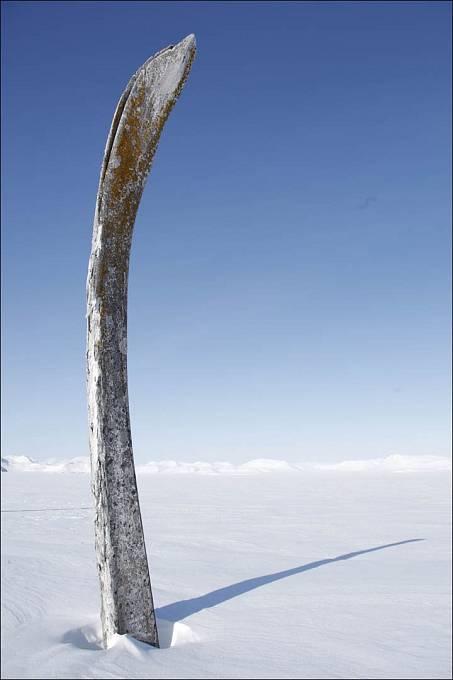 Velrybí žebra se tyčí do výšky několika metrů.