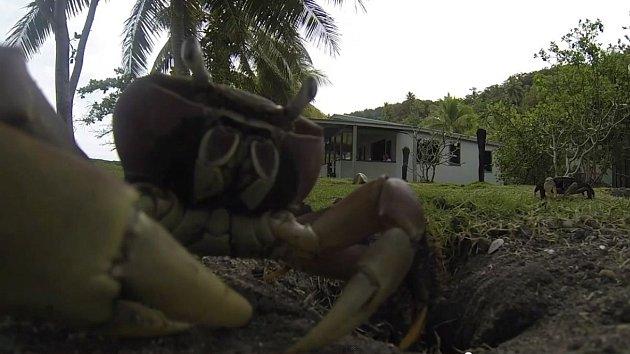 Hamižný krab zatoužil po kameře.