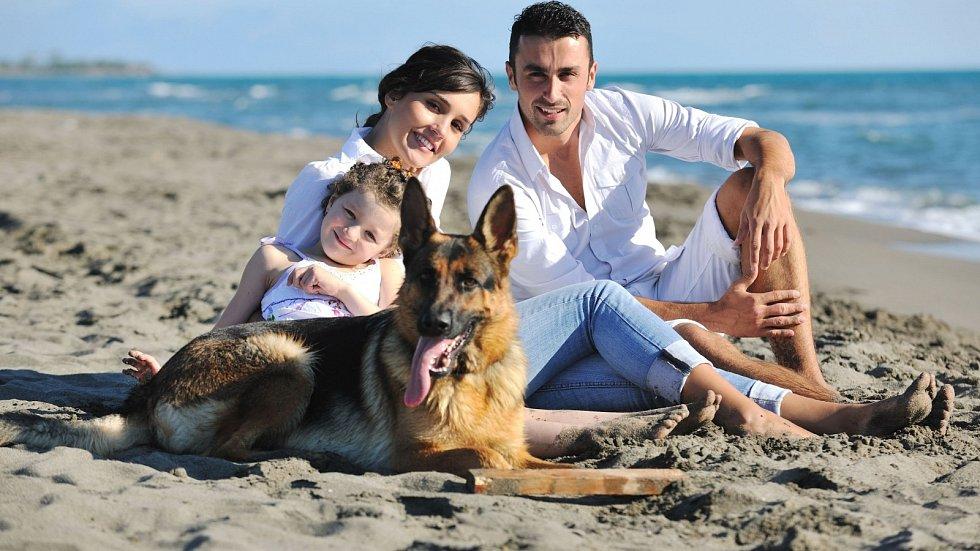 Pes nemusí během dovolené zákonitě zůstat doma!