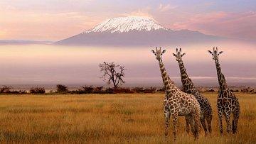 Výlet do Safari
