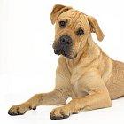 Pes je nejlepší přítel člověka. Ublížit mu, natož ho sníst, toho je schopná snad jen zrůda.