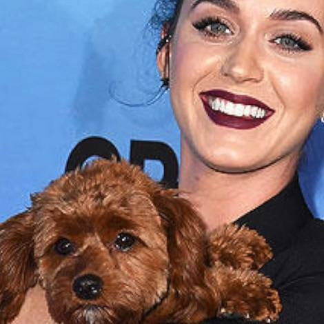 Katy Perry miluje svého psíka