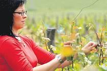 Jedna z pracovnic, které se starají o vinohrady v Sádku.