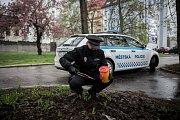 Do celorepublikové akce Jehla se pravidelně zapojuje i Městská policie Ostrava. Ilustrační snímek z dubna 2017.