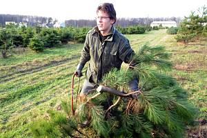 Vánoční stromek lze získat i na plantáži stromků v Ostravě-Radvanicích