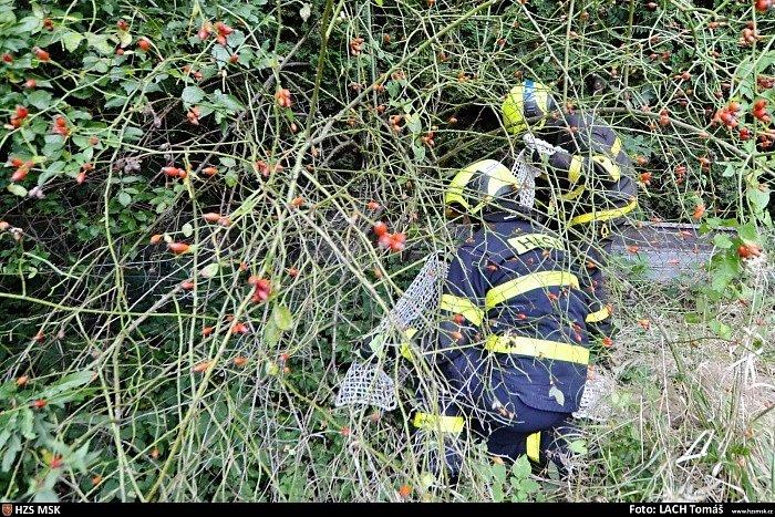 Hasiči v Ostravě lovili ve čtvrtek 17. září 2020 maru stepní, která utekla chovatelce.