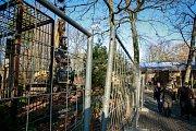 Demolici výběhu pro tygry v ostravské zoo.