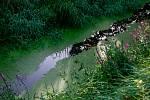 Čistější voda ve strouze ve Staré Bělé potěšila místní myslivce, věří, že úředníci zarazili vypouštění odpadů z nedalekých domků.