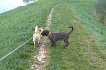 Rocky a Jimmy, psí kamarádi, které krize svedla dohromady.