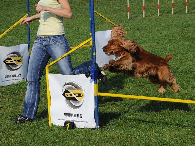 Otevřený šampionát retrieverů v agility se konal o víkendu na hřišti Základní kynologické organizace vOstravě-Třebovicích.