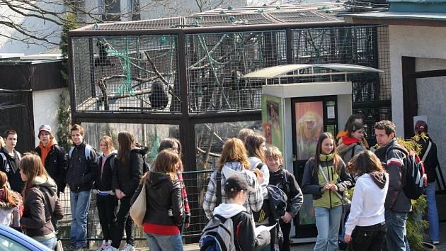 Ilustrační foto z ostravské zoo