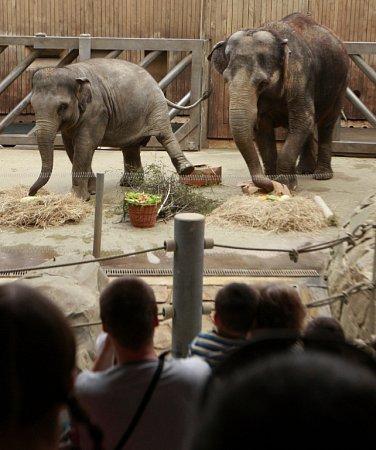 Sloní samičky Rashmi zostravské zoo oslavila 5.narozeniny.