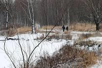 Příroda v okolí Heřmanického rybníka, která se stala domovem mnoha živočichů, bude pod větší ochranou.
