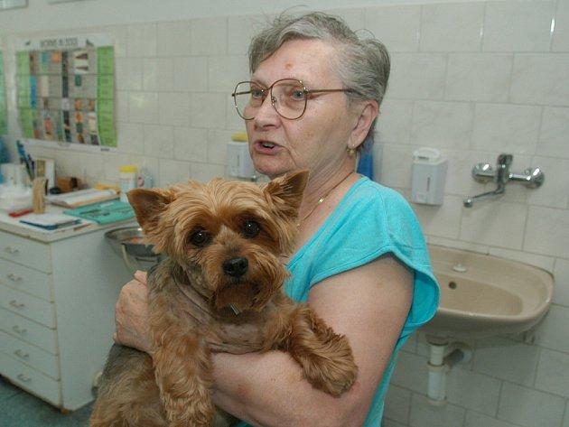 Devítiletého yorshírského teriéra Benyho pokousal zuřící pes na krku. Jeho páníček je hospitalizován ve Fakultní nemocnici v Ostravě.