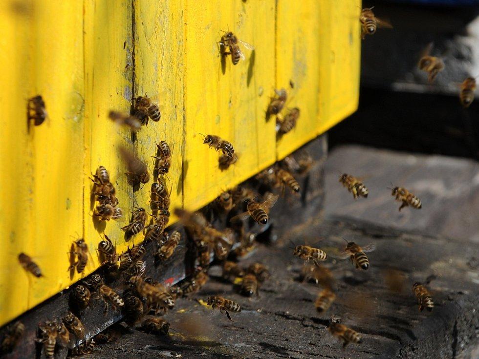 Včely jsou pro lidstvo nepostradatelné.
