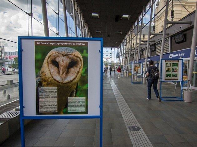 Cestující na vlakovém nádraží ve Svinově si mohou zkrátit čekání na rychlík prohlížením fotek z výstavy věnované záchranným projektům ostravské zoo.