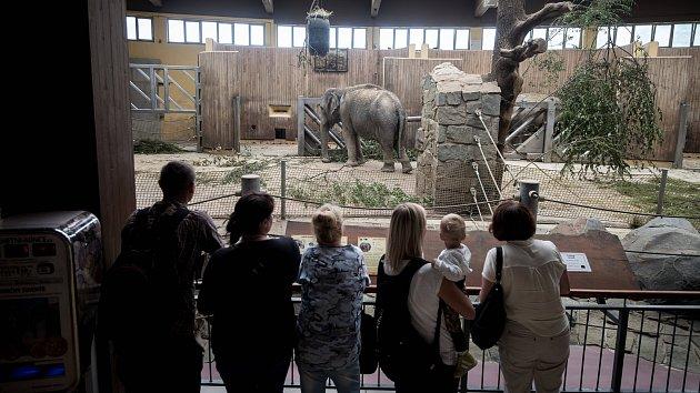 Chov slonů v ostravské zoo