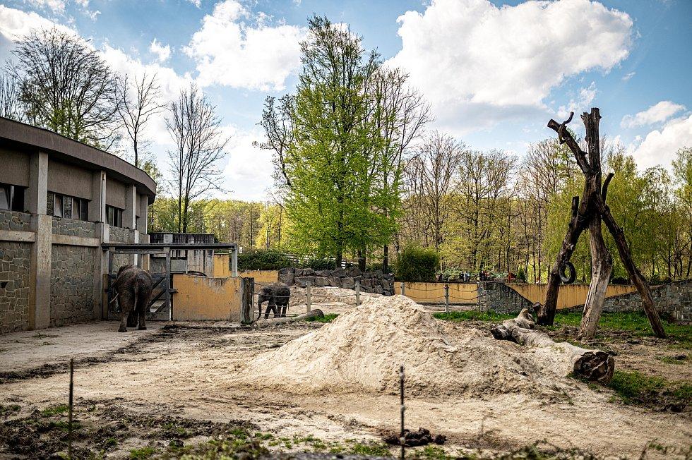 Zoologická zahrada Ostrava. Ilustrační foto, květen 2021.