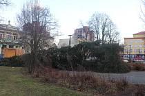 Spadlý vánoční strom v Ostravě-Zábřehu.