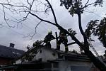 Odstranění nakloněného stromu v Ostravě-Vítkovicích.