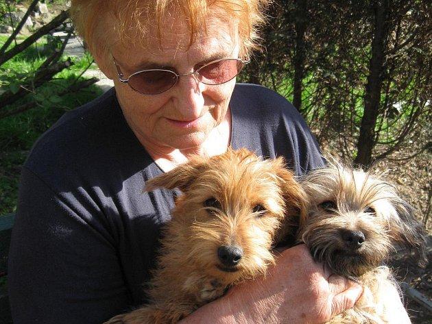 Důchodkyně Daniela Synková z Ostravy-Heřmanic se stará o desítky psů.