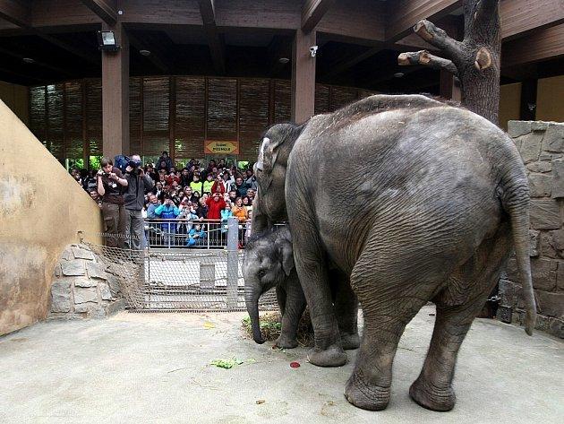První narozeninová oslava malé sloní slečny se konala v sobotu 14. dubna 2012. Na Rashmi čekal speciálně připravený dort z rýže, ovoce a zeleniny