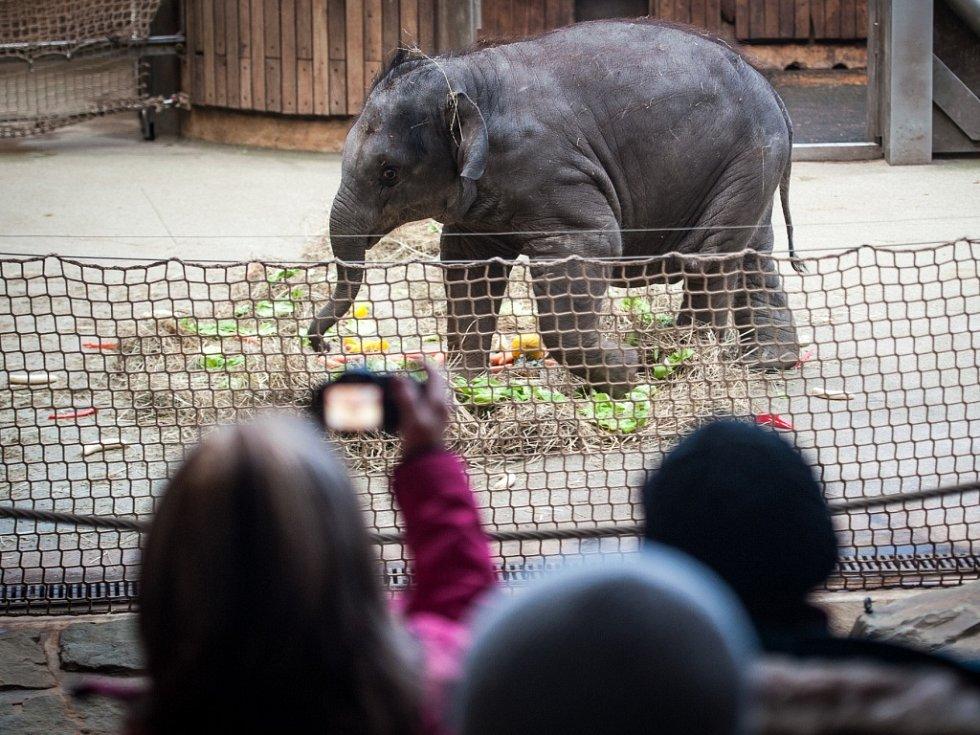 Oslava narozenin nejmladší slonice v ostravské ZOO.
