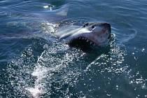Na přehlídce bude také snímek Mýtus jménem žralok