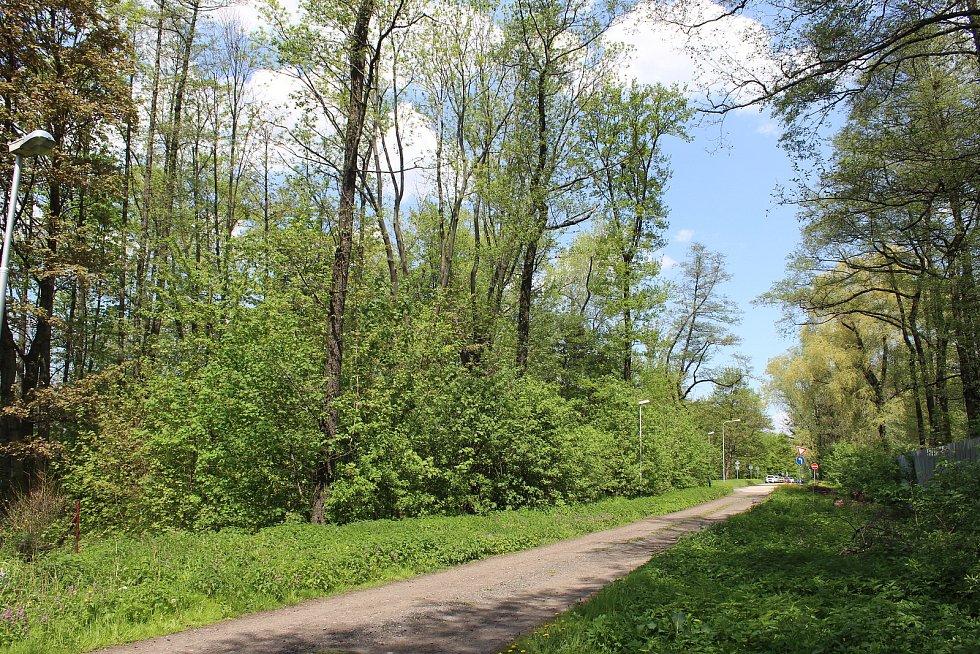 Usedlíkům v Ostravě-Kunčicích se nelíbí záměr výstavby skladovací haly a kácení toho mála lesního porostu (na snímku), který v okolí je. Obávají se také zvýšení frekvence nákladní dopravy a skladování stavebního materiálu.