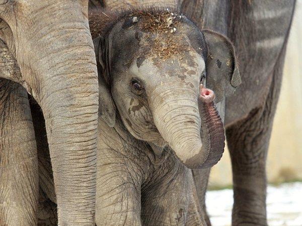 Sloní slečna Rashmi