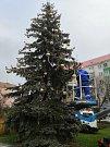 Vánočně nazdobený smrk v Krnově.