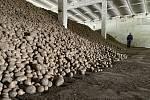 Tři až čtyři koruny za kilo brambor vypěstovaných našimi zemědělci. Za takovou cenu jsou v těchto dnech k mání ve čtyřech velkoskladech v České republice