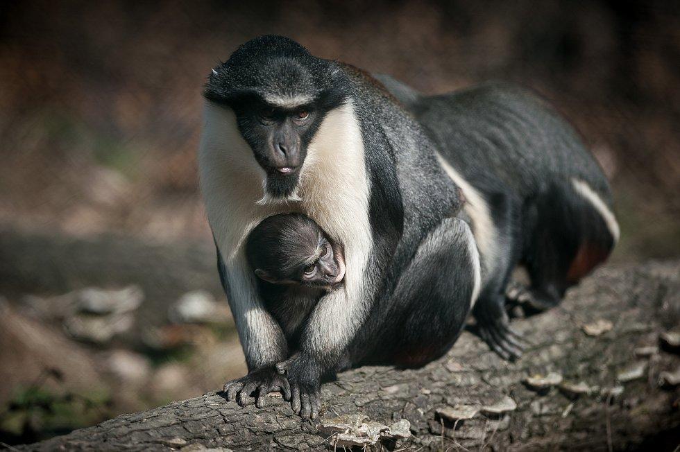 Mláďata v Zoo Ostrava narozená v posledních letech.