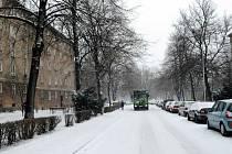 Stromy na ulici Matěje Kopeckého v Ostravě-Porubě