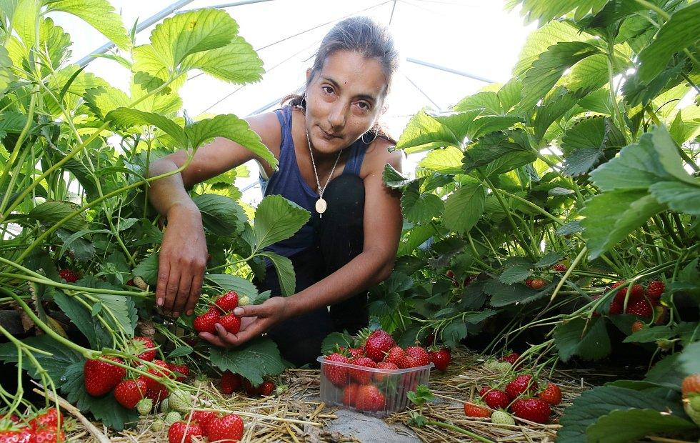 Ovocnáři: Loňský superúrodný rok se opakovat nebude