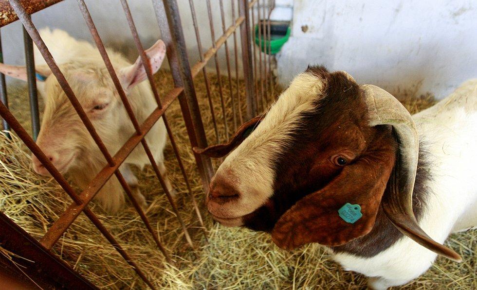 Společnost Vítkovská zemědělská s.r.o. se zabývá ekologickým zemědělstvím.