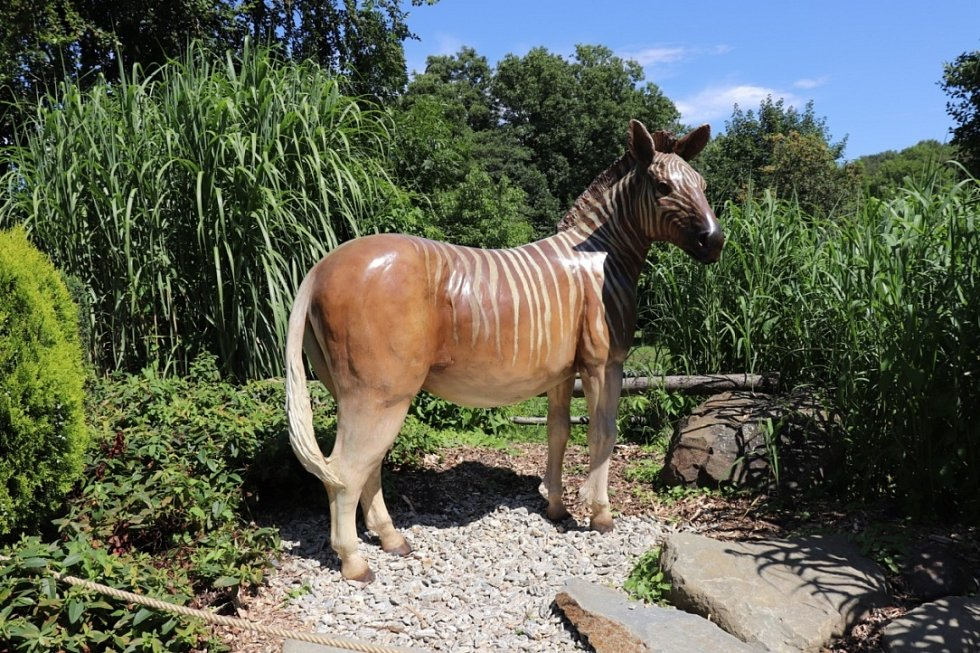 Model zebry kvaga