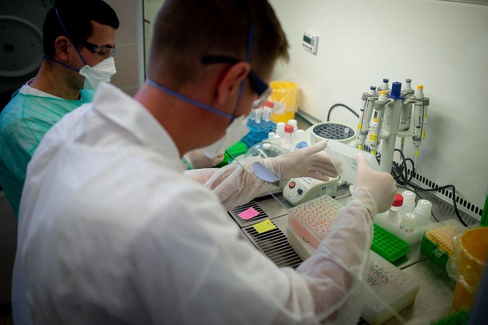 Testování koronaviru, laboratoř AGELLAB. Ilustrační foto