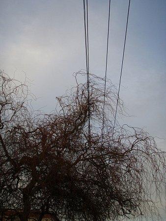 Odklízení větví zelektrických drátů vHlučíně.