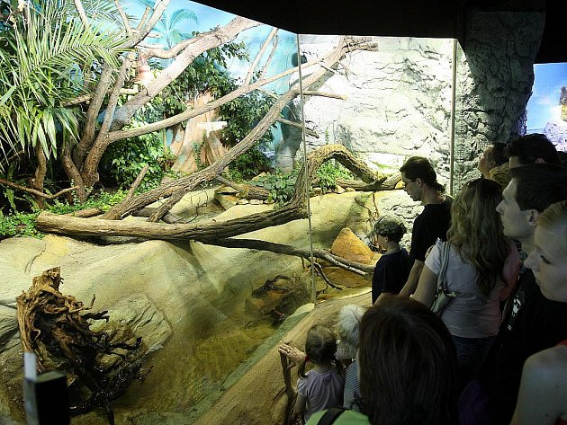 Otevření nové expozice Papua v ostravské zoo.