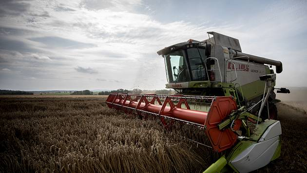 Úroda obilí bude na Žďársku dobrá. I tak se čeká zdražení potravin