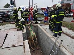 Záchranu velkých zvířat pomocí speciální závěsné sítě a makety koně s ohebnými klouby trénovali moravskoslezští hasiči.