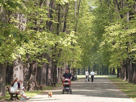 Důvodem ke kácení lip v Komenského sadech má být jejich špatný stav, a tedy možné riziko padajících větví.
