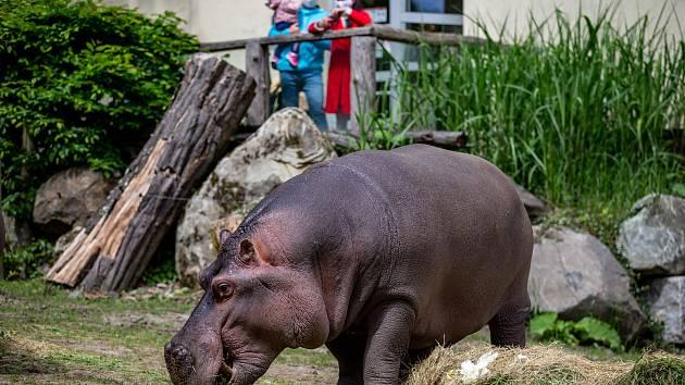 Zoologická zahrada Ostrava. Ilustrační foto.