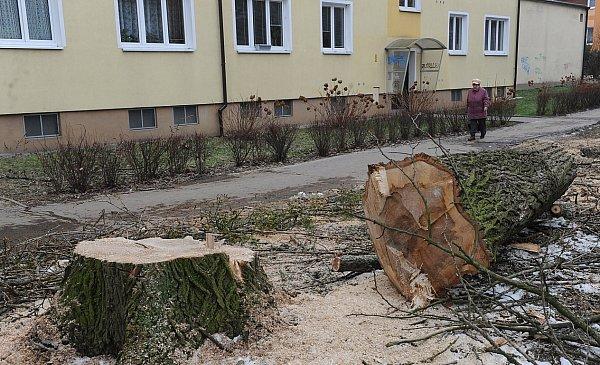 VPorubě se začaly kácet stromy