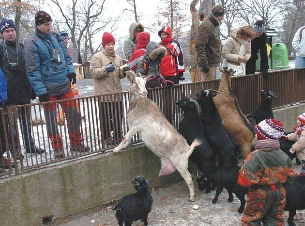 V ostravské zoo bylo o vánočních svátcích rušno