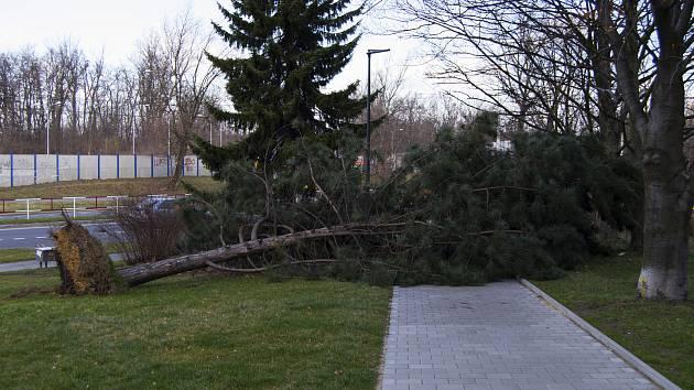 Vyvrácený strom městské části Fifejdy, 11. března 2019 v Ostravě.