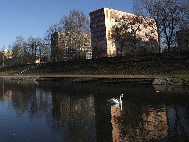 Téměř jarní počasí, které letos v zimě panuje v České republice, způsobilo, že některé druhy ptáků zatím neodletěly na jih do svých zimovišť a zůstávají u nás.